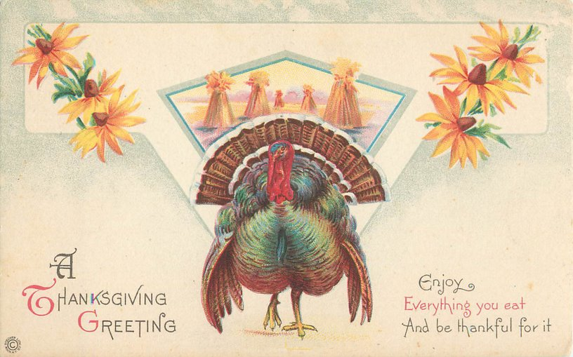 A Thanksgiving Greeting Postcard --Turkey, Sunflowers