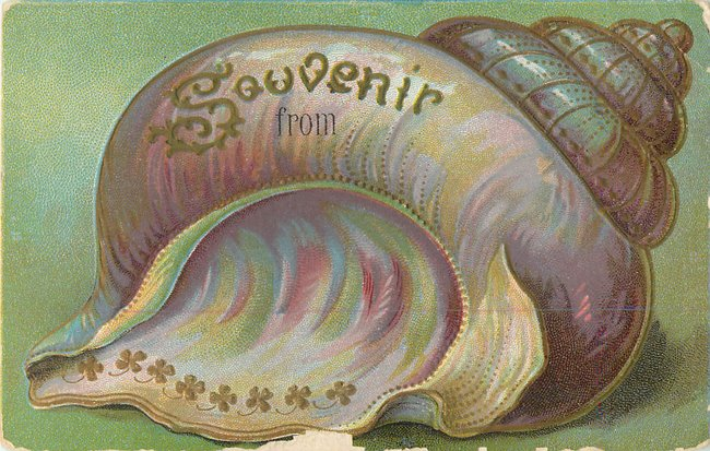 """Souvenir From"". Large conch seashell with gold outline (copy2)"