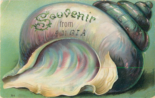 """Souvenir from"" Large conch seashell"