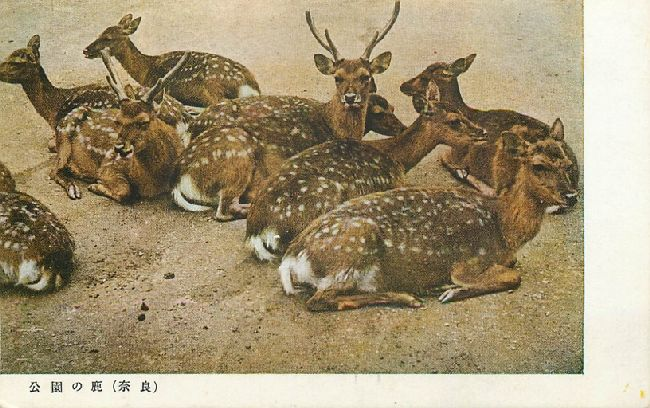 Deer Group in Nara Park, Japan