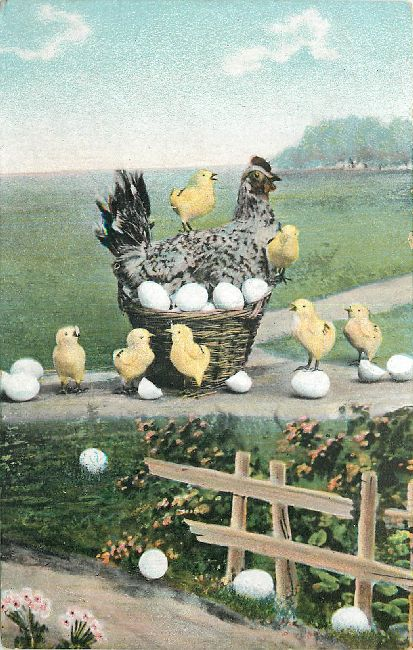 Animal Postcard - A Hen and her chickens