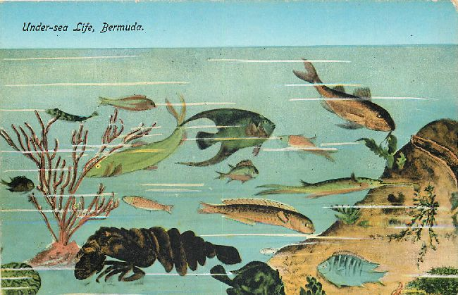 Under-sea Life, Bermuda