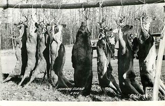 HUNTING SCENE - Postcard - Copyright LL Cook Co. 1940