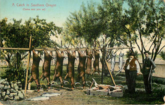 A Catch in Southern Oregon Hunting Postcard P.N.C. Series