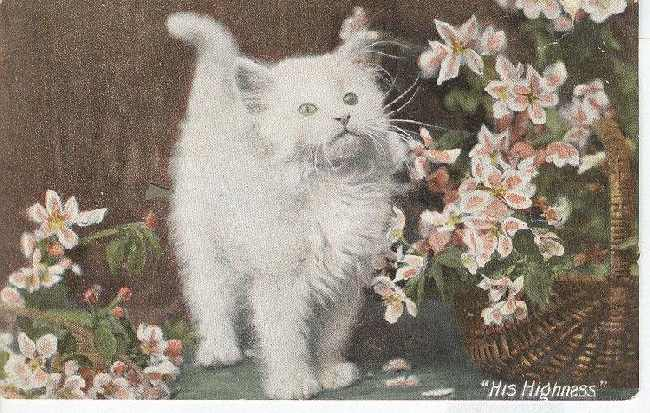 "CAT Postcard ""His Highness"""