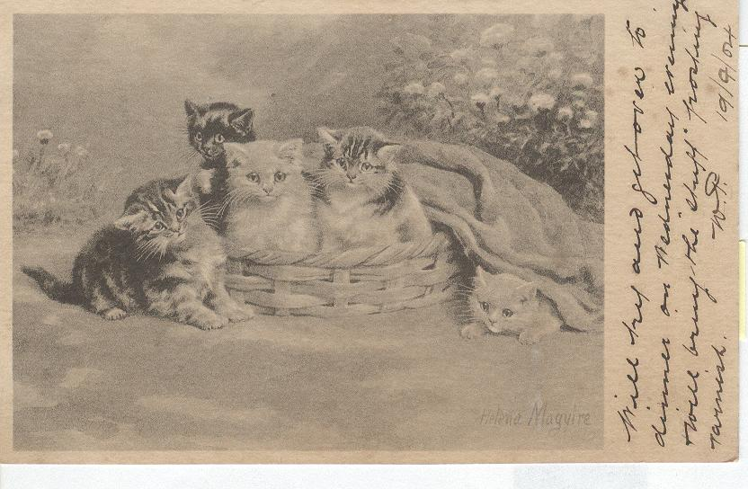 CAT Postcard SIGNED Helena Maguire 1904