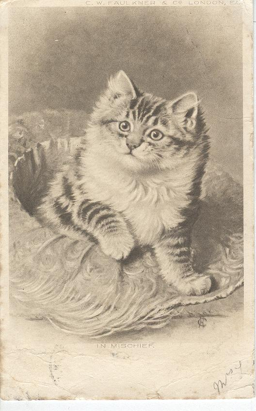 CAT Postcard 1904 SIGNED