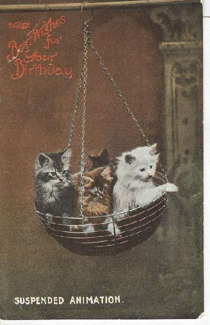 "CAT Postcard ""Suspended Animation"""