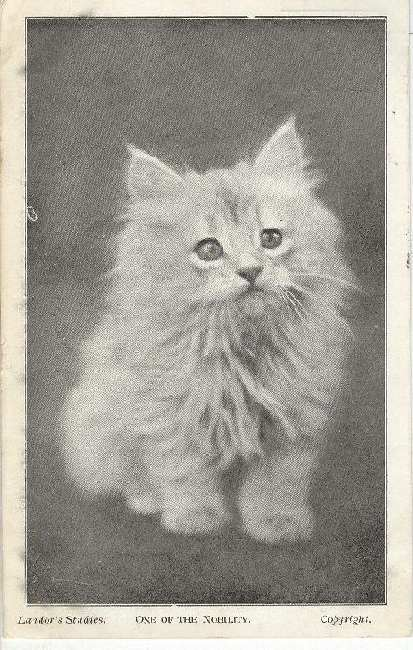 "CAT Postcard ""One Of The Nobility"" 1905"
