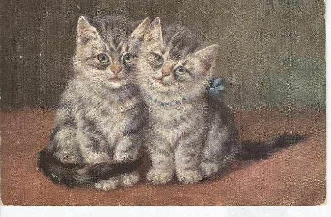 CAT Postcard Artist Signed 1905