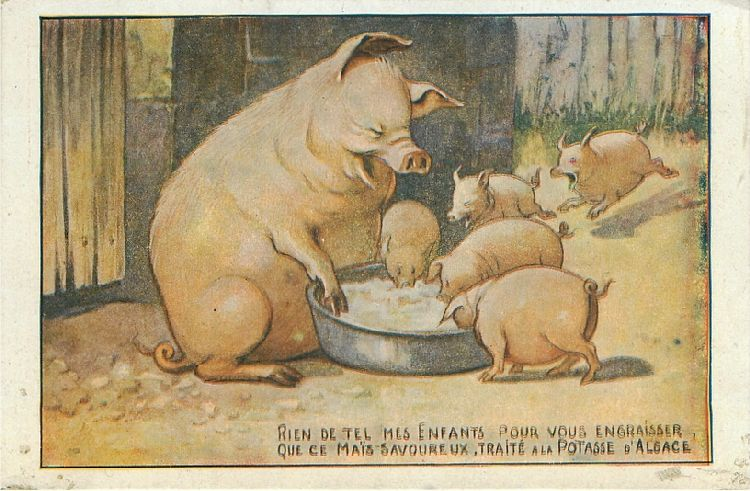 Pig with Many Piglets