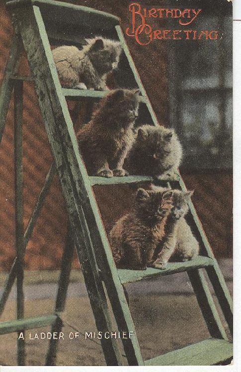 "CAT Postcard ""A Ladder of Mischief"""