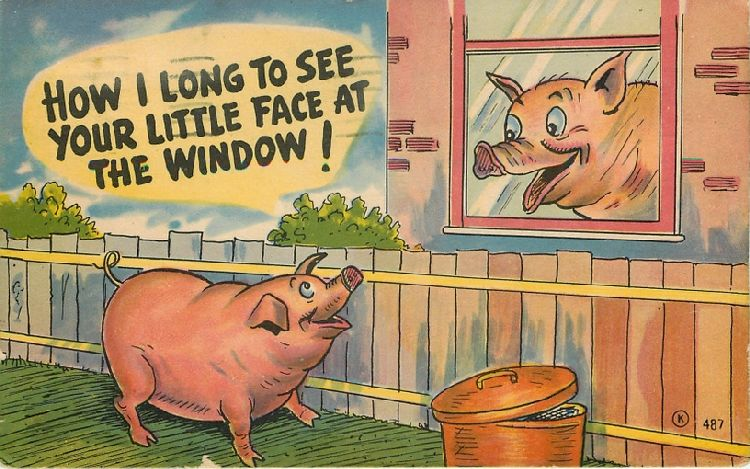 """How I Long to See Your Little Face at the Window!"" Two Pigs"