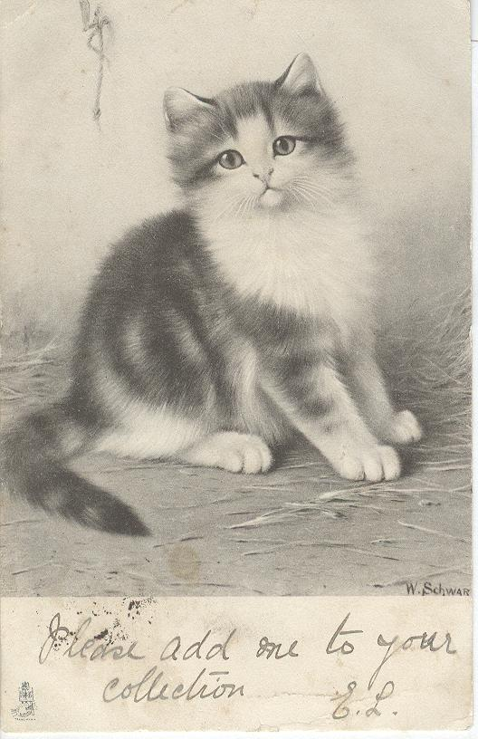 CAT Postcard Signed W.Schwar 1904 VERY RARE