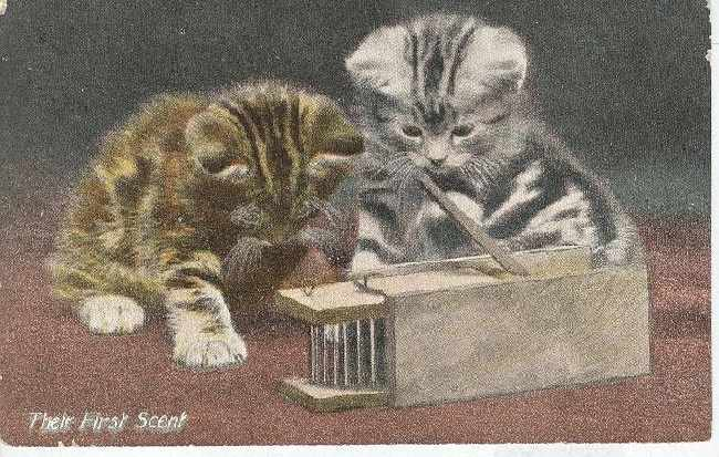 "CAT Postcard ""Their First Scent"" 1910"