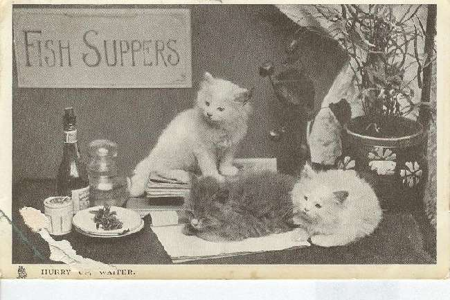 "CAT Postcard TUCKS ""Hurry up waiter"" Fish Suppers"