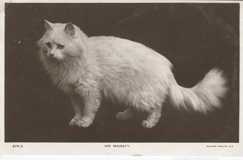 "CAT Postcard ""His Majesty"" 1905"