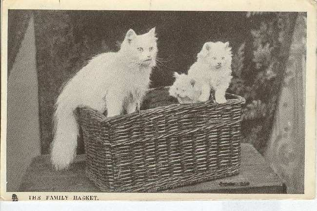 "CAT Postcard ""The Family Basket"" TUCKS"