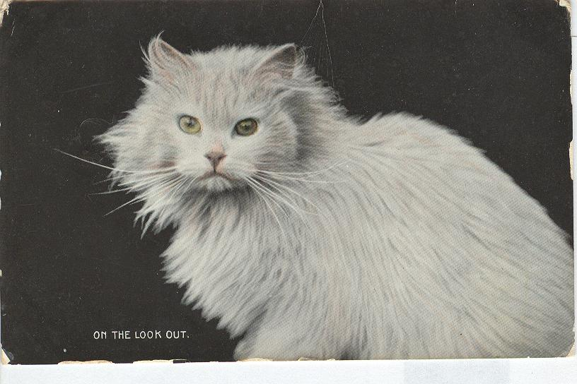 "CAT Postcard ""On the Look Out"" 1907"