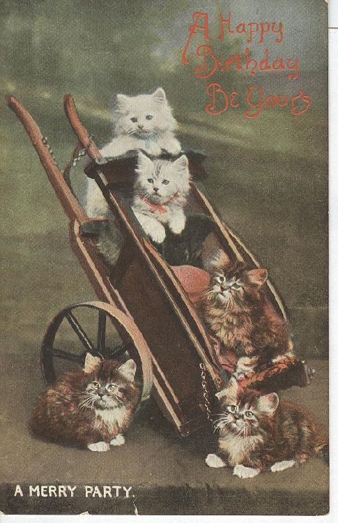 "CAT Postcard Happy Birhtday be Yours ""A Merry Party"""