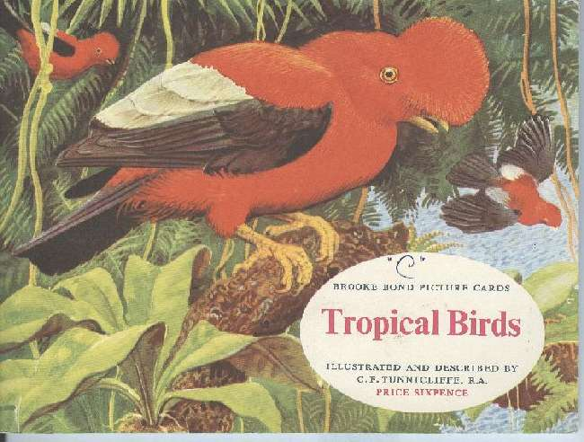 Tropical Birds Brooke Bond Picture Cigarette Postcard Book