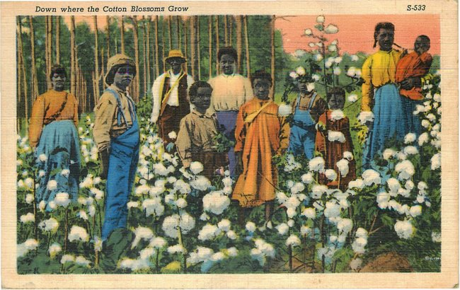 Black Americana Postcard - Down where Cotton Blossoms Grow