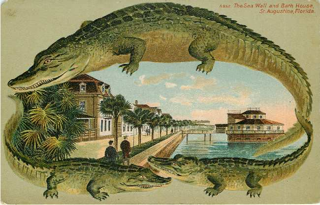 Alligator Border St Auustine Florida Postcard