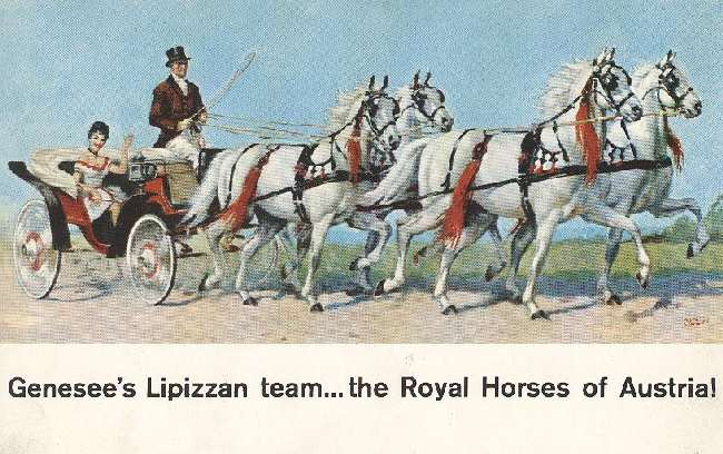Alcohol Postcard - Genesee's Lipizzan team...