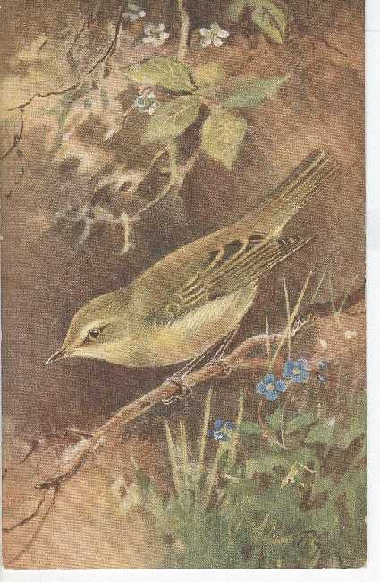Artist Signed Postcard - D.G. Bird Willow Warbler
