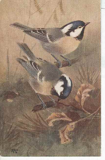 Artist Signed Postcard - R.G. SIGNED BIRD COAL TIT (Parus ater)