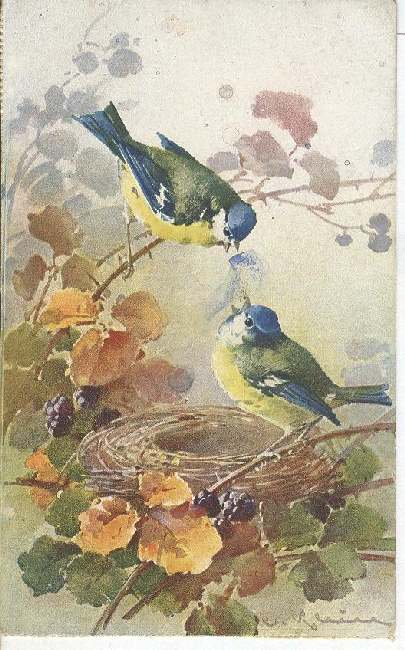 Artist Signed Postcard - C. Klein Two Birds And A Nest