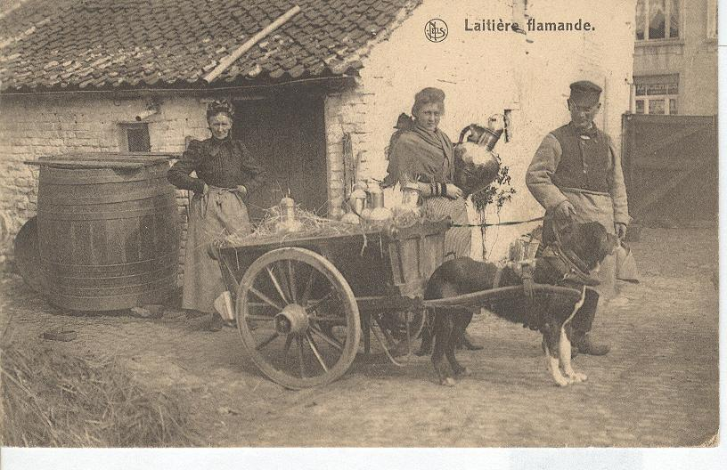Dog Pulling a Wagon