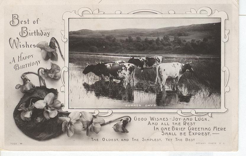 Birthday-Best of Birthday Wishes Shows Cows Wading in Pond
