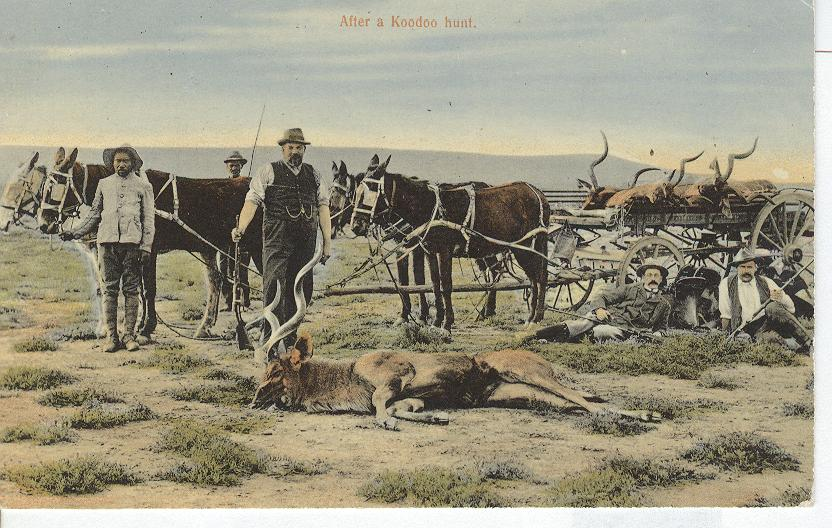 After a Koodoo Hunt