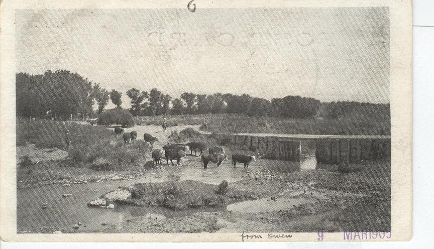 Cattle from Owen