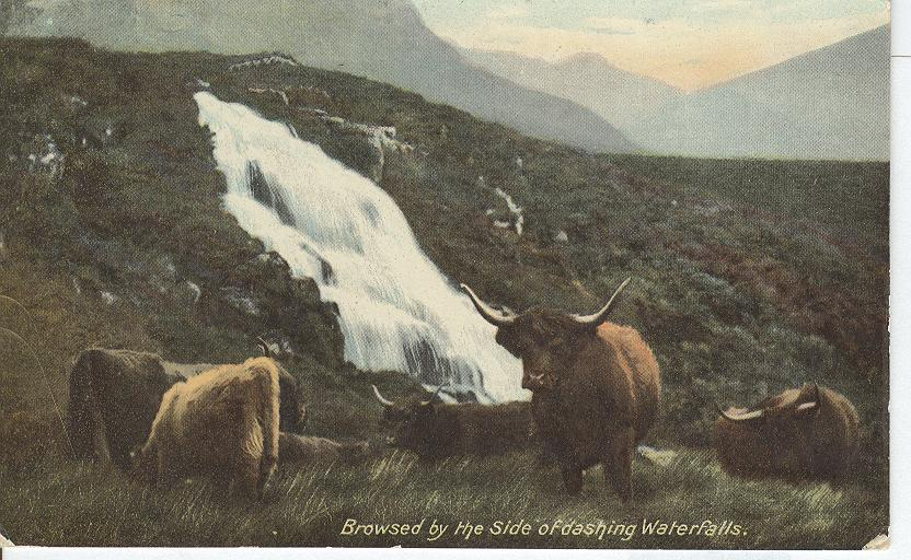Bulls Browsed by the side of dashing waterfalls