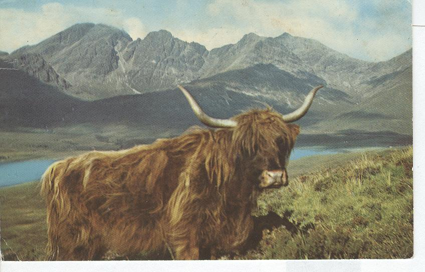 Bull at Lakeside in Mountains