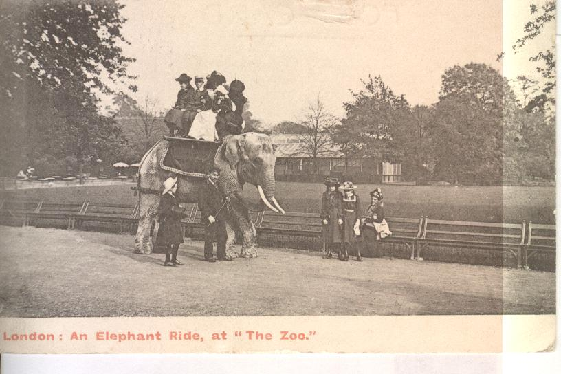 "London, An Elephant Ride At "" The Zoo"""