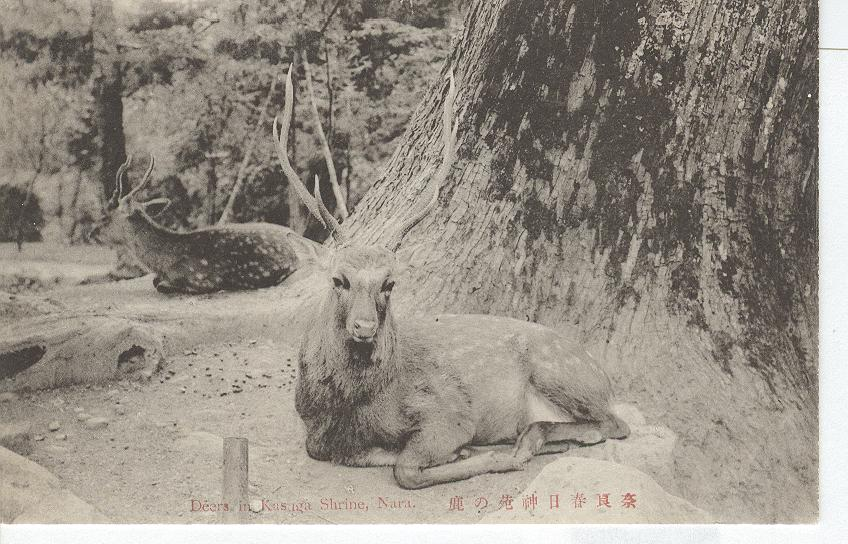 1909 Japan...Deer in Kasaga Shrine, Nara