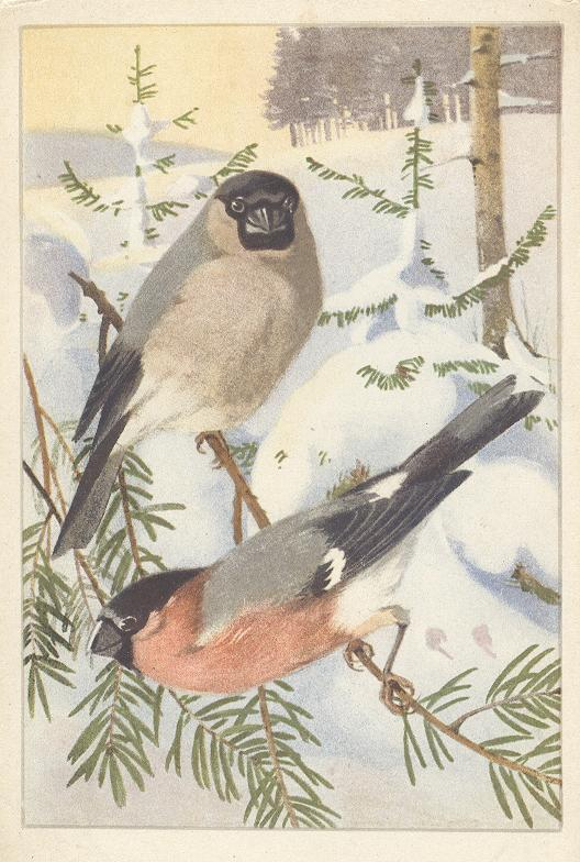 Animal Postcard - Two Birds...Bouvreuil...Snow
