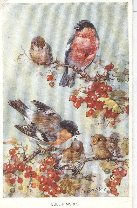 Animal Postcard - Birds-Bull Fiches