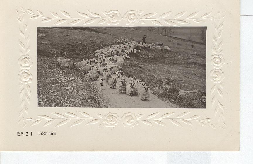 Animal Postcard - Sheep