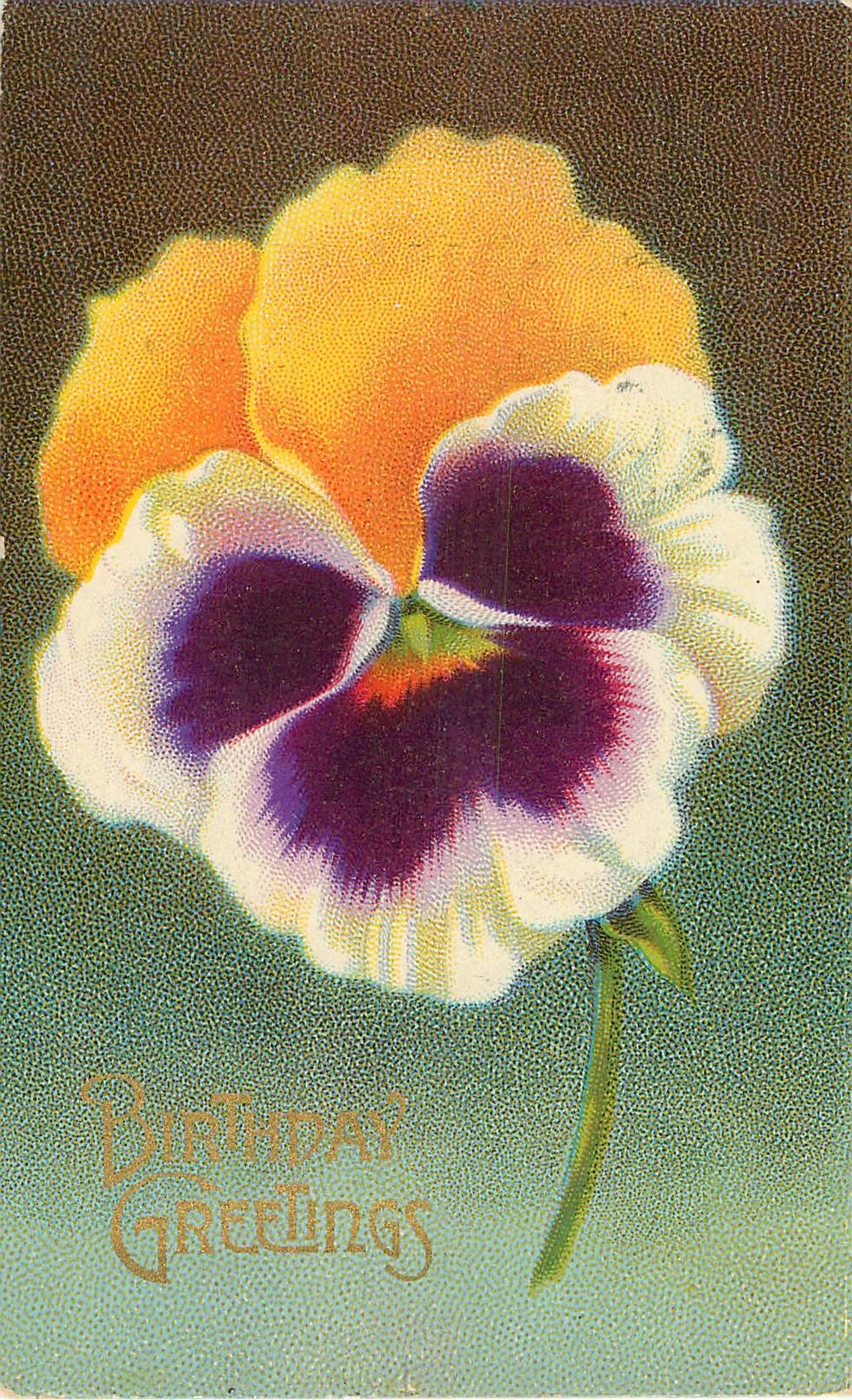 Birthday Greeting Pansy